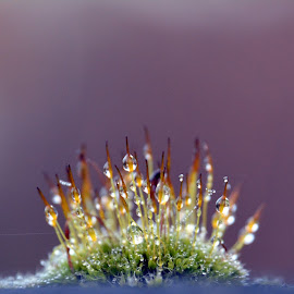 Dew Drops by DTphotography Nikon Lumix - Nature Up Close Leaves & Grasses