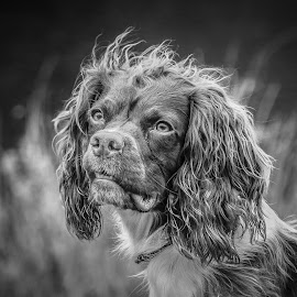 Unique by Maria Fetherstone - Animals - Dogs Portraits ( canine, unique, black and white, shade, weird, cute, dog, light, hair, eyes,  )