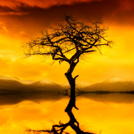 Loch Lomond Tree Sunset by Don Alexander Lumsden - Nature Up Close Trees & Bushes