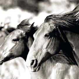 Trifecta by Dean Mayo - Animals Horses ( wild, freedom, mustangs, horses, running,  )
