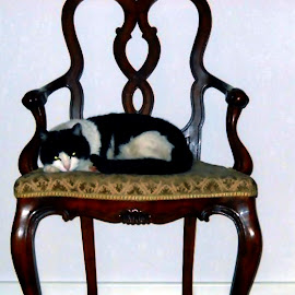 armchair&cat by Isabella Scotti - Artistic Objects Furniture ( micia in poltroncina )