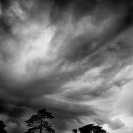 Storm through the trees by Kelly Murdoch - Landscapes Cloud Formations ( clouds, lightning, sky, ztam photography, tree, black & white, weather, storm, mono, rain, ztam )