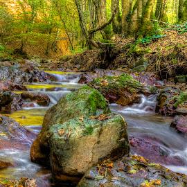 Rocky River by Siniša Biljan - Nature Up Close Water