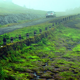 Green Journey by Mubashir Ck - Landscapes Travel ( foggy, nature, path, india, road, morning, landscape,  )