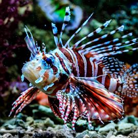 Marine Fish by Roy Husada - Animals Sea Creatures