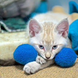 Isla at the Shelter by Martha Pope - Animals - Cats Kittens ( cat, kitten, shelter, adopt, rescue, foster )