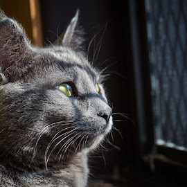 Waiting for a home by Gary Lura - Animals - Cats Portraits ( cat, shelter, pets, adopt, rescue )
