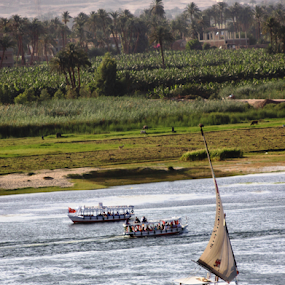 The Nile by Lynn Morley - Transportation Boats ( luxor, sailing, green, boats, nile, river,  )