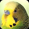 App Parrots apk for kindle fire