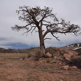 Barren Tree by Teresa Francis - Landscapes Forests