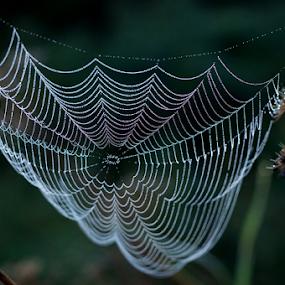 by Allan Wallberg - Nature Up Close Webs ( natural detail, spider webs, nature, pattern, vackert, beautiful, nice, natural, hair, cobwebs,  )