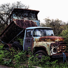 Abandoned by Ines Raycheva - Transportation Other ( old, truck, beautiful, useless, abandoned truck, russian, tree, nature, interesting, rust, zil, bulgaria, abandoned,  )