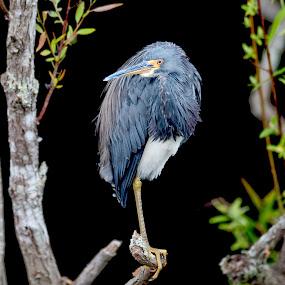 by Joe McBroom - Animals Birds