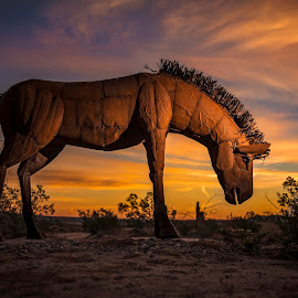 Sunrise Silhouette by Lance Emerson - Artistic Objects Other Objects ( flash, beatiful, horse, sunrise, colorful, mood factory, vibrant, happiness, January, moods, emotions, inspiration )