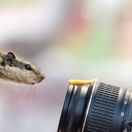 u r bieng clicked by Mahesh Sharma - Animals Other Mammals