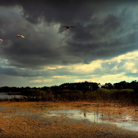 Tropical storm approaching by Elfie Back - Landscapes Weather ( tropical storm, wetlands, weather, storm, hurricane )