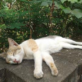 Don't disturb me, i'm sleeping... by Sooraj K S - Animals - Cats Portraits ( cat, noon, sunny, sleeping, wall )