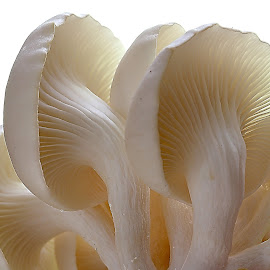 by Wahyudi Barasila - Nature Up Close Mushrooms & Fungi (  )