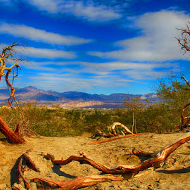 Window to the Desert by Fred Herring - Landscapes Travel