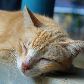 Pretending to be asleep by Yosua Ardian - Animals - Cats Portraits