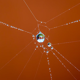 Bejeweled by Nicole Williams - Novices Only Macro ( reflection, cobweb, droplet, dew, web, jewels )