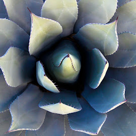 The Beauty of Agaves by Joel Rivera - Nature Up Close Other plants