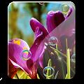 Download Little Flowers Bubble Cute HD APK