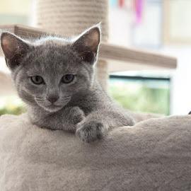 Kitten by Aleksander Cierpisz - Animals - Cats Kittens