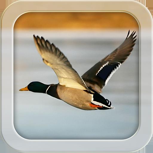 運動必備App My Duck Log LOGO-綠色工廠好玩App