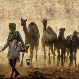 Behind the line  by Mahesh Bisht - Animals Other ( puskar, 2014, india, puskarfair, puskar2014 )