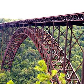 Natural Gorge Bridge by Leah Zisserson - Buildings & Architecture Bridges & Suspended Structures ( west virginia, gorge, state park, scenic, bridge, , vertical lines, pwc )