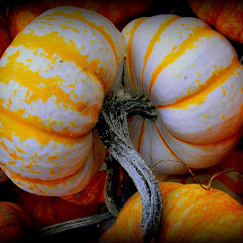 The lines on pumpkins and squash intrigue me by Liz Hahn - Nature Up Close Gardens & Produce