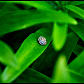 There you are! by Nina Kriznic - Animals Other ( up close, macro, nature, green, nature up close, nature photography, snail,  )