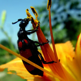 by Thapasya Vijayan - Nature Up Close Other Natural Objects ( pollen, flower, beetle )