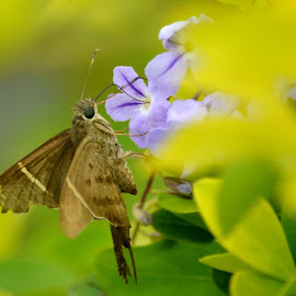 Feeding time by Leslie-Ann Boisselle - Novices Only Wildlife ( butterfly, lilac, green, brown, flower )