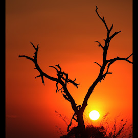 Dead tree by Romano Volker - Landscapes Sunsets & Sunrises