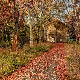 feeling of autumn by Nenad Milic - City,  Street & Park  City Parks ( park, nature, autumn, colors, nikon, fall, color, colorful,  )