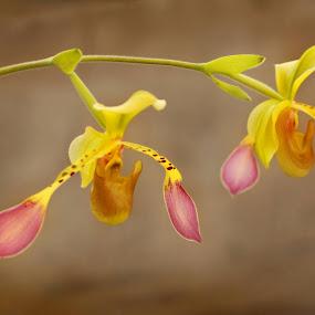 by Christine Weaver-Cimala - Flowers Flower Buds (  )
