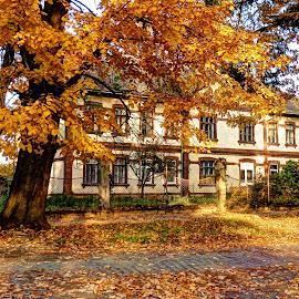 Fall in my area.. by Željko Salai - City,  Street & Park  Neighborhoods
