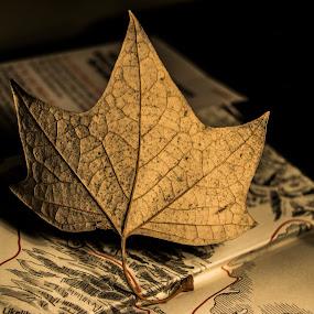 Seca by Sergio Yorick - Artistic Objects Still Life ( still life, artistic, object, artistic objects, leaf,  )
