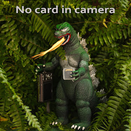 No card in camera by Michael Wolfe - Artistic Objects Toys ( sd card, toy, camera, fire breathing monster, toys, ferns, fire )