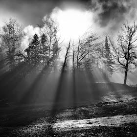 Sun Through Trees B&W.jpg
