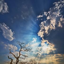 Last Soul by KIN WAH WONG - Landscapes Sunsets & Sunrises ( god's lights, old tree, soul, cloudy, scenery, landscape, dead tree, last soul )