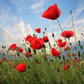 by Marjan Smit - Flowers Flowers in the Wild