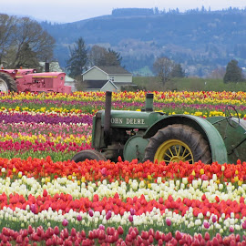 Daily Double by Larry Peeler - Transportation Other ( field, tractors, nature, colorful, tulips, beauty )