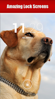 Screenshot of Dog Breeds, HD Catalog