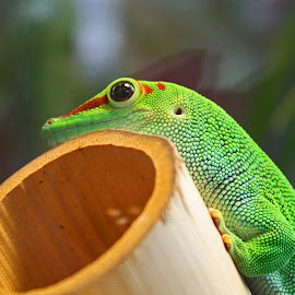 by Michele Williams - Animals Amphibians