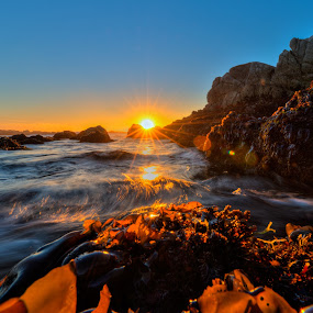 Seaweedset by George Krieger - Landscapes Waterscapes ( seaweed sunset california )