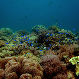 coral garden  by Claudia Weber-Gebert - Landscapes Underwater ( coral garden, corals, wideangle, reef, underwater, waterscape, sea, ocean, landscape, diving )