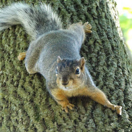 Squirrel climbing down by Theresa Campbell - Novices Only Wildlife